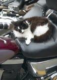 Gato en una moto Formato vertical Fotos de archivo