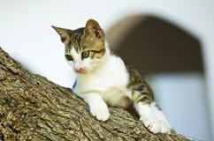 Gato en una ramificación de árbol Fotografía de archivo libre de regalías