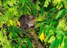 Gato en una ramificación de árbol Foto de archivo libre de regalías
