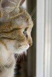 Gato en una ventana Fotos de archivo libres de regalías