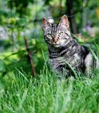 Gato en una yarda Imagenes de archivo