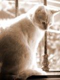 Gato en ventana Foto de archivo