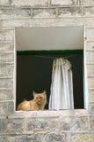 Gato en ventana del cuarto gótico de Barcelona, España Foto de archivo libre de regalías