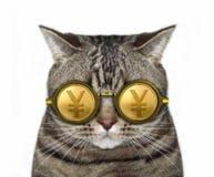 Gato en vidrios de los yenes del oro fotografía de archivo