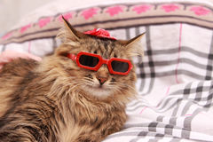 Gato en vidrios rojos y sombrero rojo imágenes de archivo libres de regalías