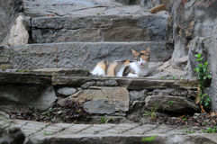 Gato en viejos pasos Foto de archivo