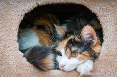 Gato encajonado Imagen de archivo libre de regalías