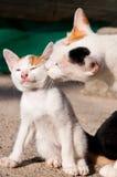 Gato encantador Fotografia de Stock