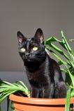 Gato encantador Imagens de Stock Royalty Free