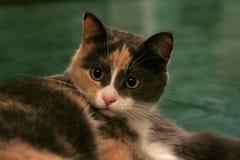 Gato encantador Foto de Stock