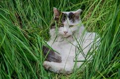 Gato encantador Fotos de archivo