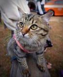 Gato encantador Fotografía de archivo libre de regalías
