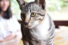 Gato encantador Imagen de archivo