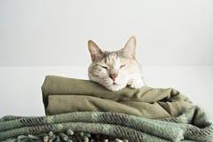 Gato encantador do sono imagens de stock