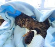 Gato enfermo Imagen de archivo libre de regalías