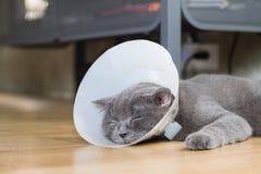 Gato enfermo con el cuello veterinario del cono Imagen de archivo libre de regalías