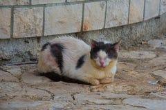 Gato enfermo de la calle fotos de archivo libres de regalías