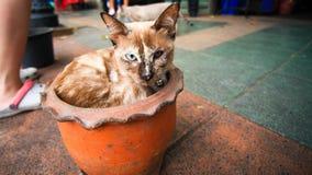 Gato enfermo en un crisol de flor Foto de archivo libre de regalías