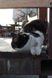 Gato enfocado hacia arriba Fotografía de archivo