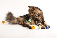 Gato engraçado Imagem de Stock Royalty Free