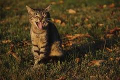 Gato engraçado Imagens de Stock