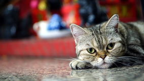 Gato engraçado fotografia de stock