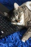 Gato engraçado bonito com o portátil no sofá em casa, fundo azul foto de stock royalty free