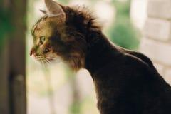 Gato engraçado com haitcut após a luz de vista da janela da preparação dentro imagem de stock royalty free