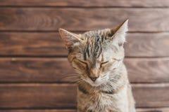 Gato engraçado com olhos fechados fotografia de stock