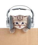 Gato engraçado do gatinho nos fones de ouvido na caixa de cartão Imagem de Stock Royalty Free