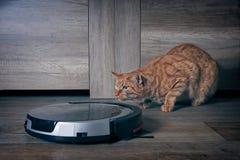 Gato engraçado do gengibre que espreita atrás de um aspirador de p30 do robô foto de stock royalty free