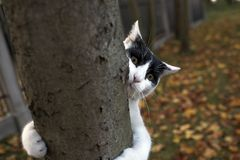 Gato engraçado na árvore fotografia de stock