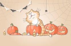 Gato engraçado que cinzela abóboras para o Dia das Bruxas Fotos de Stock