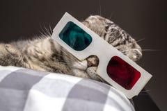 Gato engraçado que olha um filme na televisão nos vidros 3D Fotos de Stock Royalty Free