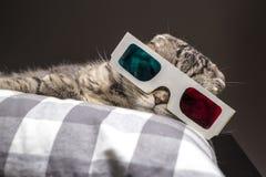 Gato engraçado que olha um filme na televisão nos vidros 3D Foto de Stock Royalty Free