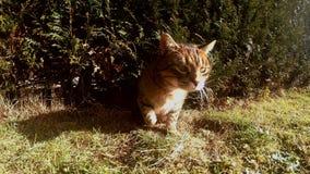 Gato engraçado que rasteja através de um furo no jardim 4K video estoque