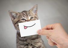 Gato engraçado que sorri com língua imagem de stock