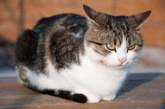 Gato enojado Fotografía de archivo