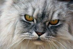 Gato enojado Foto de archivo