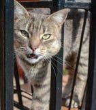 Gato enojado Foto de archivo libre de regalías