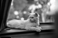 ¡Gato enojado! Fotografía de archivo libre de regalías