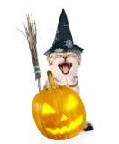 Gato enojado con el palillo, la calabaza y el sombrero de la escoba de brujas para Halloween Aislado en blanco Imagen de archivo