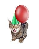 Gato enojado del cumpleaños Fotografía de archivo
