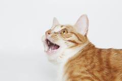 Gato enojado en el blanco Fotos de archivo libres de regalías