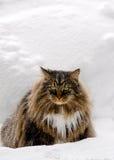 Gato enojado frío en la nieve Foto de archivo libre de regalías