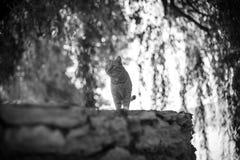 Gato entre as árvores Fotografia de Stock Royalty Free