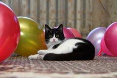Gato entre bola de aire Imágenes de archivo libres de regalías