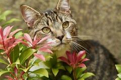 Gato entre flores Imagem de Stock