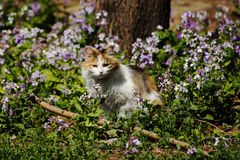 Gato entre las flores Fotos de archivo