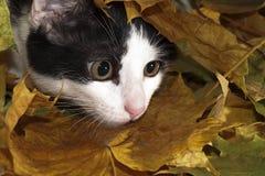 Gato entre las hojas Imágenes de archivo libres de regalías